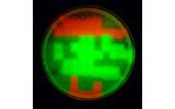 遺伝子操作で作られたマリオのドット絵-大阪大学のチームが発表の画像