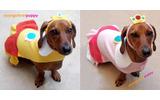 犬もハロウィンにはオシャレを ― 海外ゲームファンの作ったコスプレ集の画像