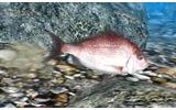 Fish Eyes 3Dの画像