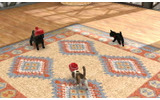 nintendogs + catsの画像