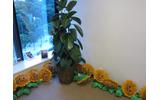観葉植物と並んでいましたの画像