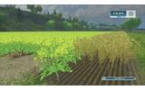 ゲーム内時間を早め過ぎると、同じ畑でも成長度が違ってしまうの画像