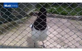 8bitサウンドを奏でる鳥、南米の秘境で発見されるの画像