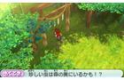 虫取りのために神社の裏の森の奥へ
