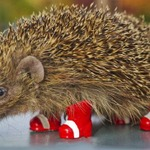 「ハリネズミを交通戦争から守ろう」 ― ソニックがハリネズミの保護に助力?