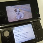 『nintendogs + cats』桐谷美鈴さんのマルチーズ「つくね」配信中