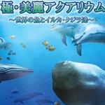 釣って育てて鑑賞、DSiウェア新作『極・美麗アクアリウム~世界の魚とイルカ・クジラ達~』6月12日配信