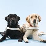 わんこ育成シミュレーション『てのひらワンコ』の支援アイテム購入で盲導犬の育成支援が可能に