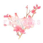 百合系ミステリィADV『FLOWERS 夏篇』PS Vita/PSPで10月22日発売、キャラ情報などが公開の画像