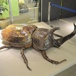 【レポート】【レポート】新作『新甲虫王者ムシキング』PRイベント…夏はスカイツリーで「大昆虫展」