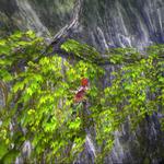 『イースVIII』ヒュンメル&リコッタの基本アクションが公開、冒険の手助けとなる「冒険具」の情報もの画像