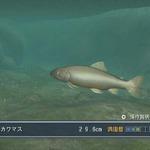 『Fish Eyes』全作品を紹介 ― ポータルサイトがオープン、最新作『フィッシュアイズWii』PVも公開